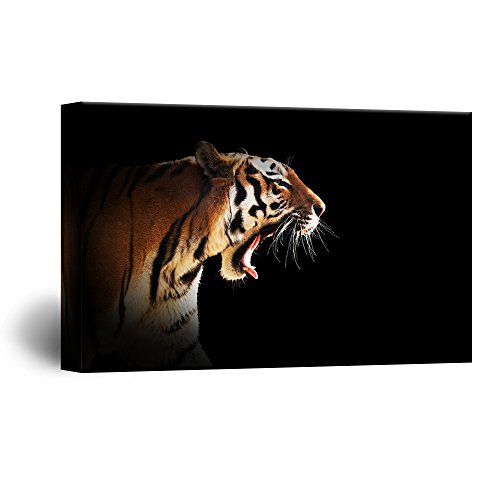 A Tiger on Black Background Gallery