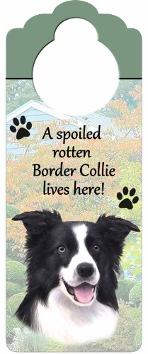 "Border Collie Wood Sign ""A Spoiled Rotten Border Collie Lives Here""with Artistic Photograph Measuring 10 by 4 Inches Can Be Hung On Doorknobs Or Anywhere In Home"
