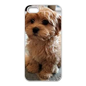 Customized Cover Case with Hard Shell Protection for Iphone 5,5S case with Poodle lxa#983956