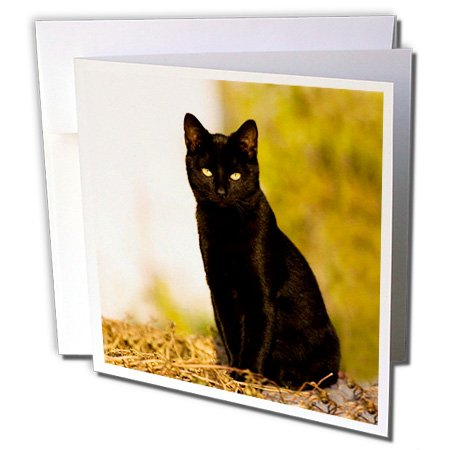 3dRose Black Cat - Greeting Cards, 6 x 6 inches, set of 6 -