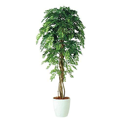 人工観葉植物 アカシアリアナ180 高さ180cm dt98983 (代引き不可) インテリアグリーン 造花 B07T1ZMJNH