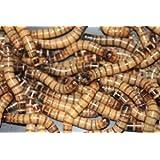 1000 Live Superworms-Reptile, Birds, Fishing Best Bait