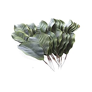 artificial Magnolia leaves pack of 30 leaves 22