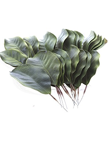 - artificial Magnolia leaves pack of 30 leaves