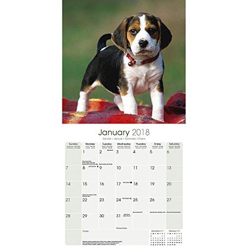 Beagle Calendar 2018 - Dog Breed Calendar - Premium Wall Calendar 2017-2018 Photo #2