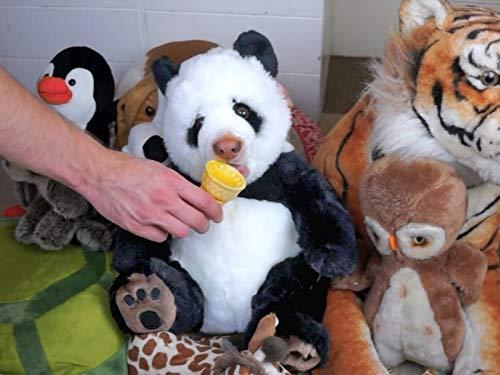 Panda Eats Ice Cream Cone: Funny Dog Maymo -