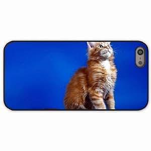 iPhone 5 5S Black Hardshell Case kitten sit fluffy Desin Images Protector Back Cover