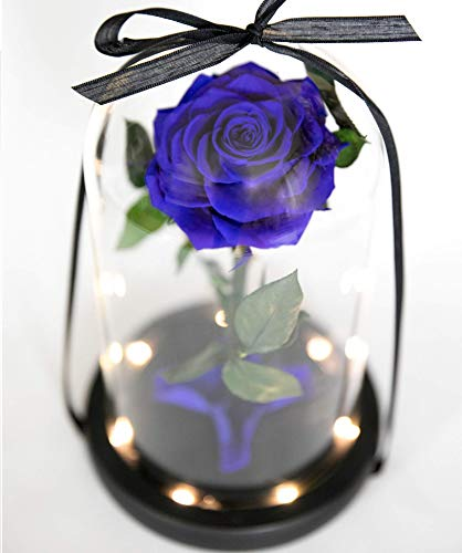 Dark Blue Rose in Glass Dome with LED Lights, Romantic Anniversary Gift inspired by Beauty and the Beast, Real Preserved Dark Blue Rose that lasts for years