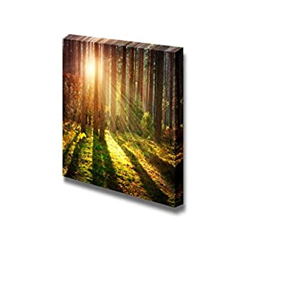 Canvas Prints Wall Art - Misty Old Forest Woods in Autumn | Modern Wall Decor/Home Art Stretched Gallery Canvas Wraps Giclee Print & Ready to Hang - 16