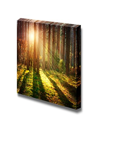 Misty Old Forest Woods in Autumn Wall Decor