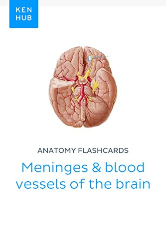 Anatomy flashcards: Meninges & blood vessels of the brain: Learn all ...