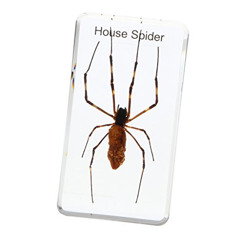 Used, MagiDeal Insect Specimen Creative Paperweight Collection for sale  Delivered anywhere in Canada