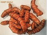 USDA Organic Turmeric Whole Raw Root