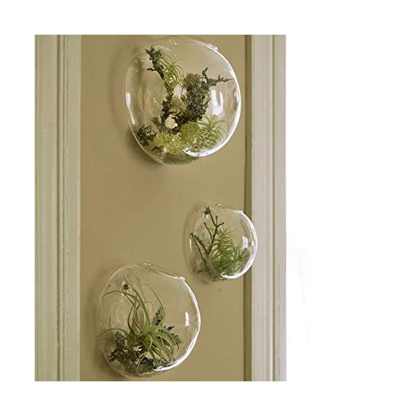 Set Of 3 Wall Hanging Terrariums Indoor Plants Holders Wall Glass Vase For Flowers Wall Mounted Planters For Succulents Air Plants Wall Decoration For Sunroom Living Room