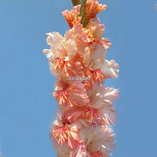 - D88D 100Pcs Rose flowes Amant Belle Fleur Plantes Flower Garden