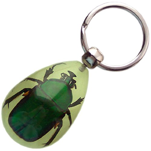 Real Insect Glow-in-the-Dark Key Chain - Emerald Rose Chafer Beetle