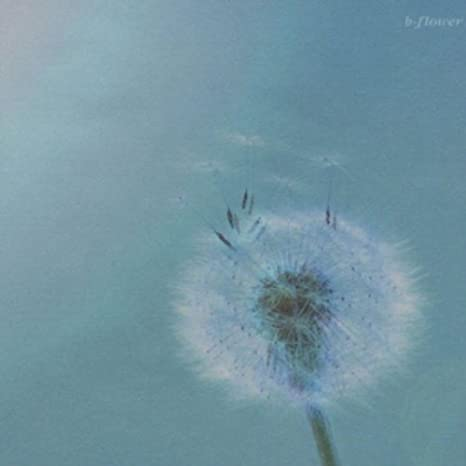 Amazon | b-flower | b-flower |...