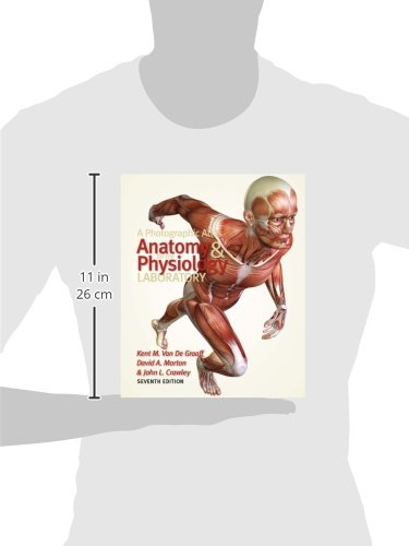 scin 132 introduction to human anatomy and physiology with lab Anatomy & physiology: how the kidneys regulate acid base balance related study materials introduction to environmental science.