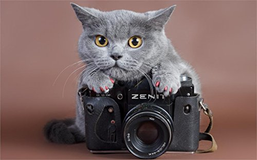 - Wall Decor Master Cat View Zenit 20X30 Inch Poster Print