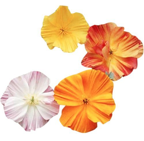 - Ballerina Mix -Rare Form of California Poppy Seeds - .1 oz.- Approximately 1,500 Seeds - Non GMO and Neonicotinoid Seed