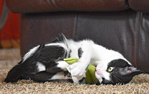 Cat Eating Cactus