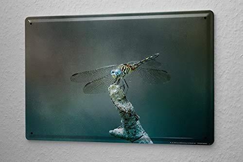 Weytff Funny Art Decor Tin Sign Nursery Dragonfly Dining Room Bedroom Living Room Garden Yard Garage Metal Sign 12x16