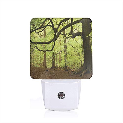 Colorful Plug in Night,English Woodland Scene with Light Coming Though The Trees Magical Mother Nature Theme,Auto Sensor LED Dusk to Dawn Night Light Plug in Indoor for Childs Adults