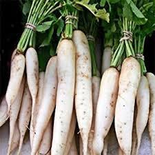 Organic Bulk Daikon Radish Seeds Japanese Minowase (1