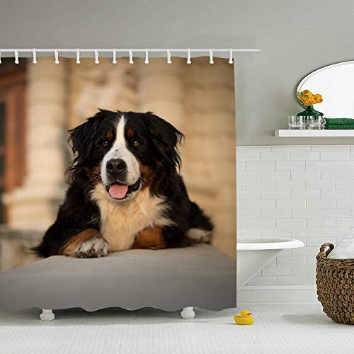 Mweet Shower Curtain Print Animal Bernese Mountain Dogs for Bathroom 65 × 71 -
