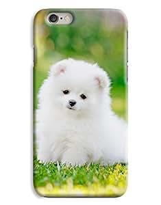 White Pomeranian iPhone 6 Plus Hard Case Cover