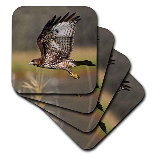 3dRose Danita Delimont - Hawks - Red-tail Hawk - set of 8 Coasters - Soft (cst_313964_2)
