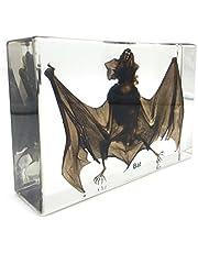 "Taxidermy Real Bat Specimens Science Classroom Specimen for Science Education(5.3""x3.5""x1.4"")"