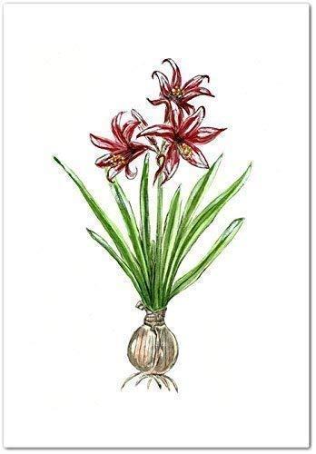 - Red Amaryllis Botanical Watercolor Art Print, Unframed