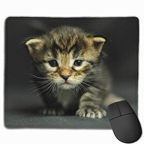 Smooth Mouse Pad Cats Kittens Dressed Up Mobile Gaming Mousepad Work Mouse Pad Office -