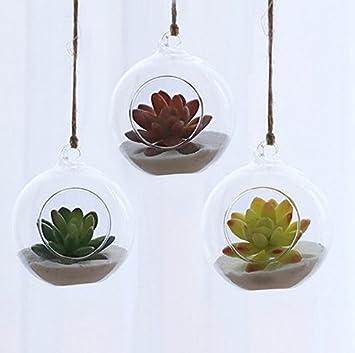 juego de maceteros para colgar air plant macetas air plant diseo de terrarios de cristal