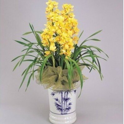 Orchid bonsai, formaldehyde air purification seeds,Phalaenopsis Orchids- 50 seeds