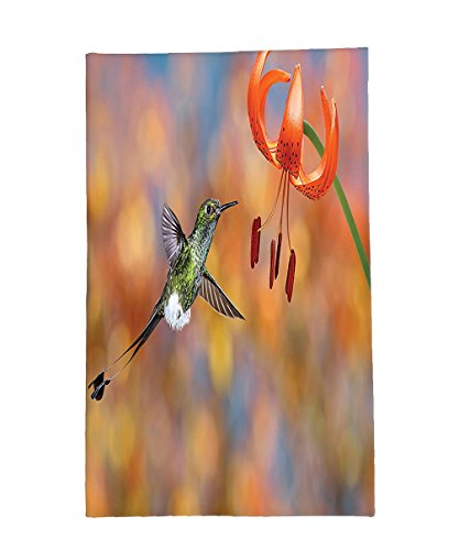 Interestlee Fleece Throw Blanket Hummingbirds Decorations The Booted Racket-Tail Feeding Nectar from Tiger Lily Blur Background Photo Orange - Nectar Ohio Green