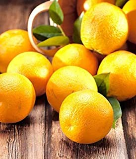 product image for Organic Oranges