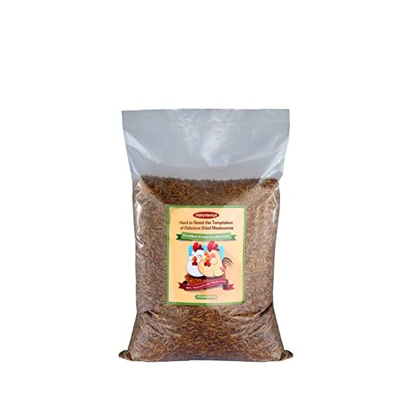 11lbs Bulk Non-GMO Dried Mealworms for Reptile, Tortoise ; Amphibian,Lizard ;Wild Birds; Chichens; Duck etc 1