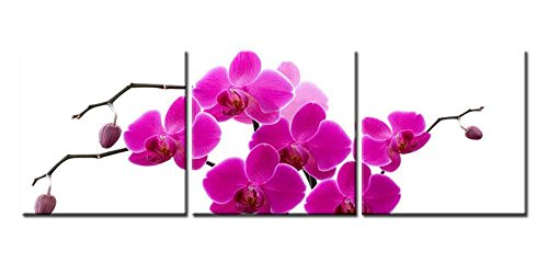 Canvas Print Wall Art Painting For Home Decor Tropical Blooming Pink Butterfly Orchid Flowers Phalaenopsis On White Background Floral 3 Pieces Panel Paintings Modern Giclee Stretched And Framed Artwork The Picture For Living Room Decoration Flower Pictures Photo Prints On Canvas ()