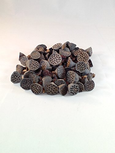Natural Dried Mini Mini Lotus Pod Heads Add To Potpourri Vase Filler Bowl Filler Perfect Size For Crafting 4 Cup Bag Hand Packed By Wreaths For Door