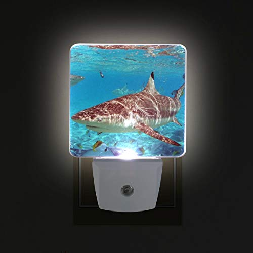 Night Light Shark Shallow Water Led Light Lamp for Hallway, Kitchen, Bathroom, Bedroom, Stairs, DaylightWhite, Bedroom, Compact by OuLian (Image #4)