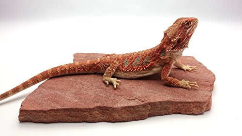 Carolina Custom Cages Natural Habitat Rocks, Watarrka Rose (Medium Size Pair) ()