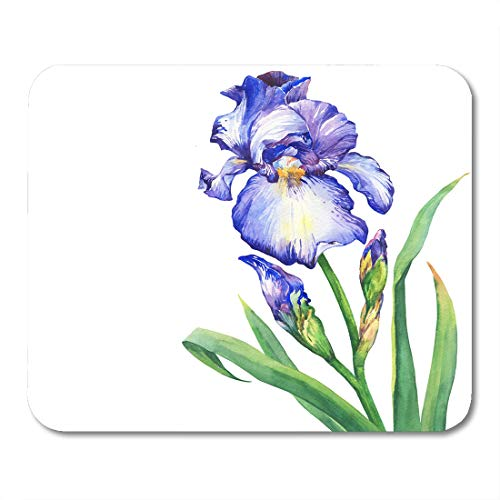 (Emvency Mouse Pads Beatiful Green Aquarel The Branch Flowering Blue Iris with Bud Watercolor Painting White Purple Aquarelle Mouse Pad 9.5
