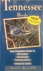 All About Tennessee Birds: Your Complete Guide
