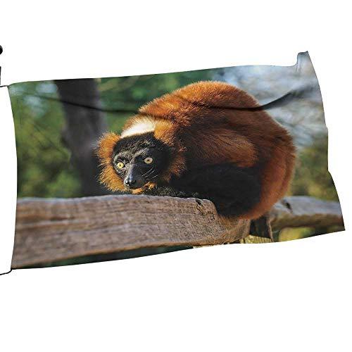 (Custom&blanket Garden Flag Set Portrait of an Adult red Ruffed Lemur in Dutch Zoo,The Netherlands Gift for Children or Parents14 x 21