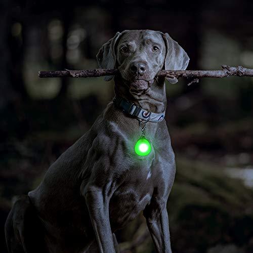 DOMIGLOW LED Dog Collar Light - 2 Packs LED Dog Tag Light for Dog Collar Clip-On Dog Lights for Night Walking & Camping (Blue & Green)