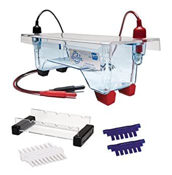 Edvotek M12 Electrophoresis Apparatus, 2 Lab Groups Sample, 7cm Length x 14cm Width Gel Trays