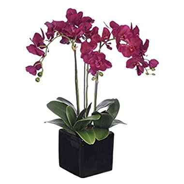 House of Silk Flowers Artificial Dark Purple Triple-Stem Phalaenopsis Orchid Arrangement