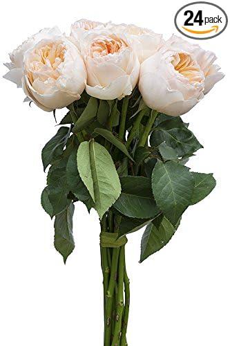 24 stems fresh cut juliet peach english rose david austin tm from - Peach Garden Rose